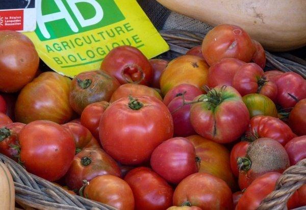 bio tomaten auf marktstand in suedfrankreich, pyrenees orientales