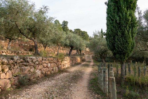 Warum Herkunft eines Olivenöls wichtig ist